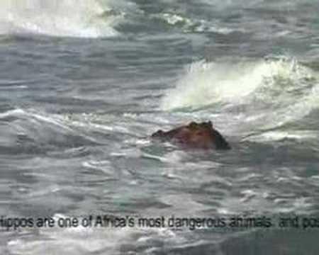 Thopmsons Bay Ballito Hippo