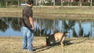 Be Free Dogs: Dog Training