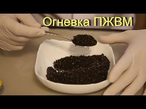 Настойка огневки пчелиной на ПЖВМ .
