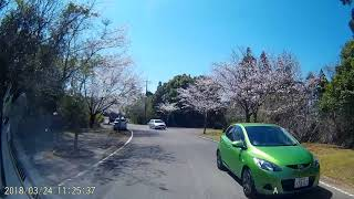 宮崎市 垂水公園桜 thumbnail