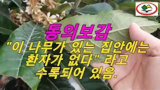 산야초특강(제369강), 동의보감 저자 허준 선생이 극…