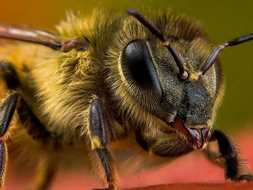 Insect Macro Photography Video Youtube