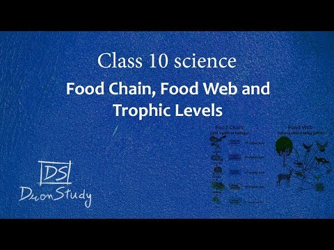 Food Chain, Food Web And Trophic Levels   Our Environment   CBSE Class 10th X Science