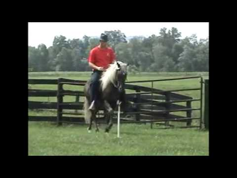 Rocky Mountain Horses, Obstacle Trail From Van Bert Farms