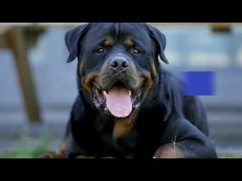 Top 10 Dog Breeds With SUPERPOWER