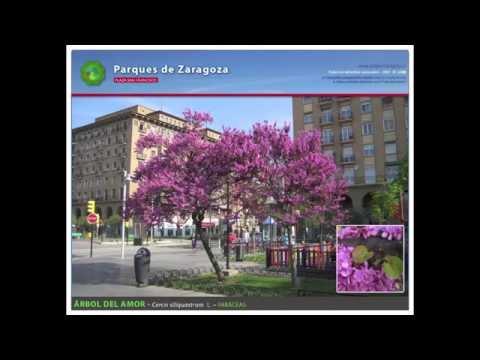Plaza San Francisco - Especies ornamentales