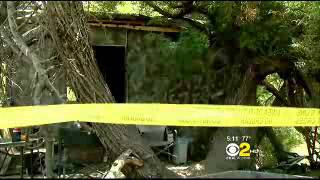 Hidden Shack In Park Discovered in Sunland Thumbnail