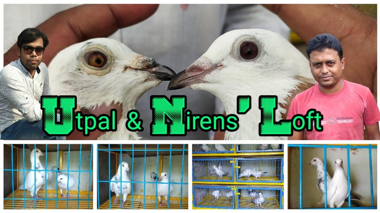 Utpal & Nirens'Loft Madrasi Pigeons Shyamnagar