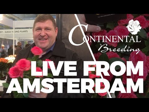 JFTV: Live from Holland - Bellalinda Spray Rose Series with Mike and Continental Breeders