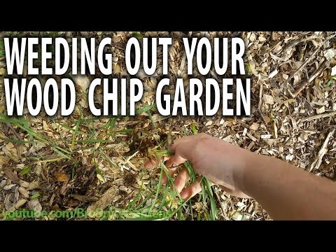 easy-weeding-in-a-wood-chip-garden---brobrycegardens