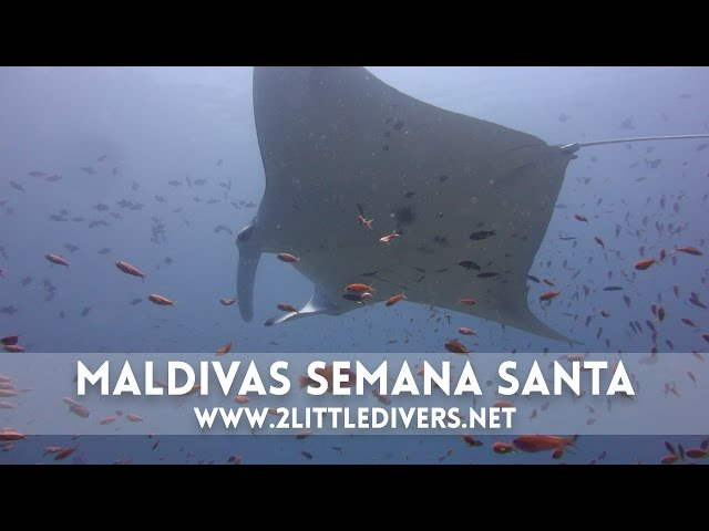 2 Little Divers | Maldivas Semana Santa 2012