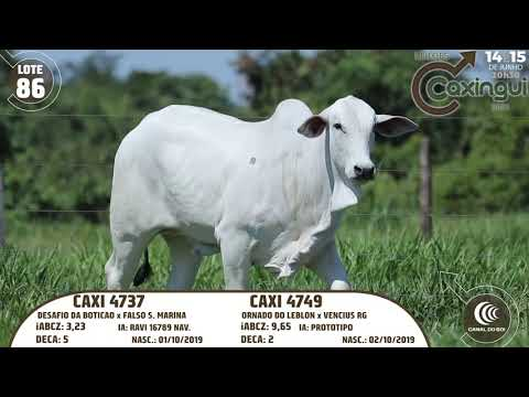 LOTE 86   CAXI 4737, CAXI 4749