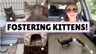 Fostering Kittens Vlog! *CUTE* | Rachel Clare