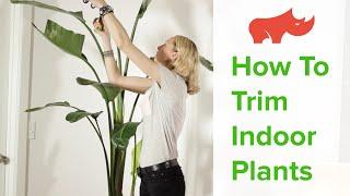 How To Trim Indoor Plants