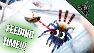 first-tarantula-feeding-in-new-year-slow-mo-edition