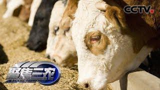 《聚焦三农》 20190913 国内饲草行业亟待发展| CCTV农业