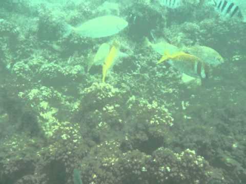 Snorkeling near Kota Kinabalu, Borneo, Malaysia