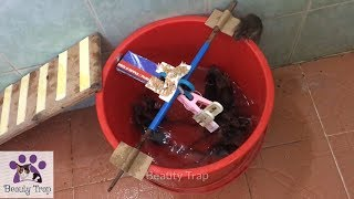 Beauty Trap Catch 7 Mice In 1 Hour With Buckets Of Water Top Mouse Trap 2019
