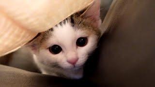 ソファー怪獣とねこ。-Sofa monster and cats.-
