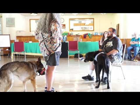 Service Dog Laws FAQ: Service Dog vs ESA vs Therapy Dog—and