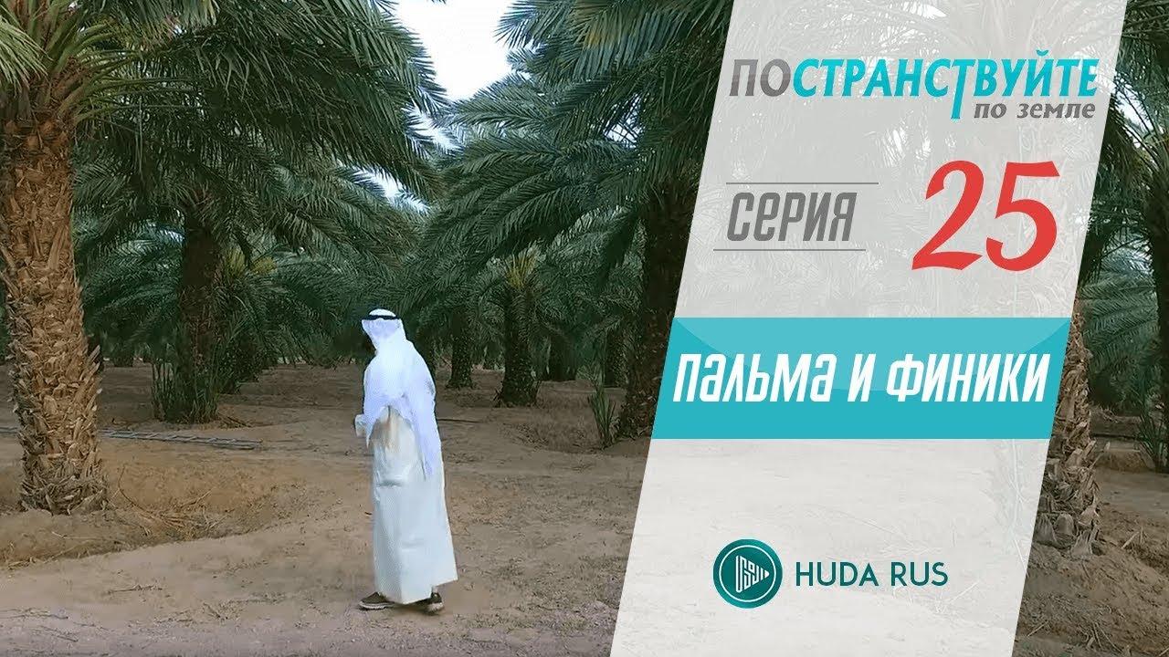 Научные факты о пальме и финиках   