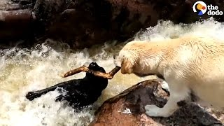 World's Most Dramatic Dog Trick | The Dodo