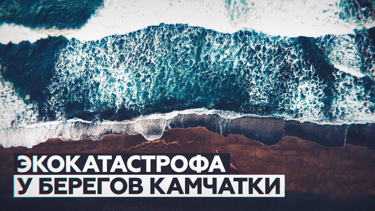 Что известно о загрязнении воды нефтепродуктами у побережья Камчатки