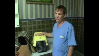 Правило перевозки животных(, 2012-06-22T09:06:38.000Z)