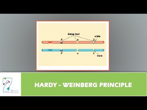 HARDY - WEINBERG PRINCIPLE