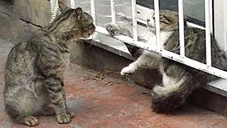 ビビッていた猫を助けたら鳴きながら懐いてついて来た! thumbnail