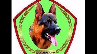Центр служебного собаководства ДОСААФ  г. Алматы полная версия