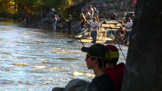 Salmon Fishing October 2013, Pulaski NY