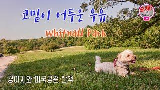 [우유와 산책] 코밑이 어두운 우유 Whitnall P…