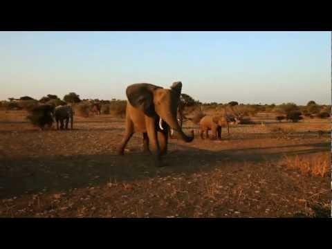 Voyage LO Safari Afrique 2014