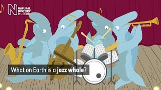 What on Earth is a jazz whale? | Natural History Museum