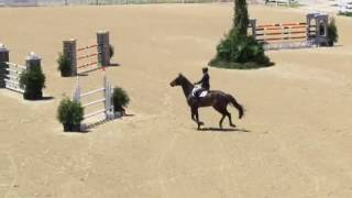 Video of DOMINO ridden by CARA CHESKA from ShowNet!