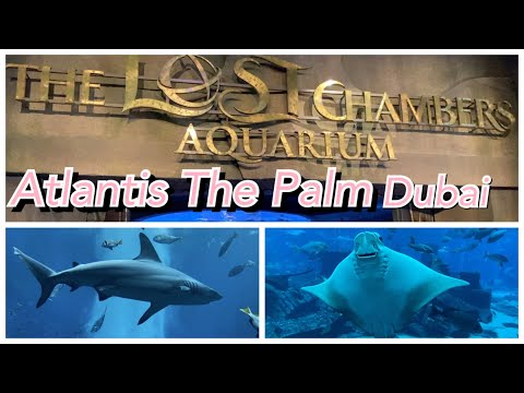 The Lost Chambers Aquarium in Atlantis, The Palm Dubai | The New Normal