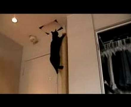 Cat Climbing His Scratch Post Youtube