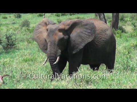 Cultural Vacations and Safaris -- Orlando, Florida