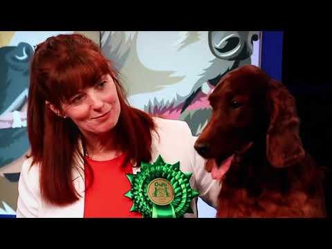 Crufts 2020 - Irish Setters UK & Ireland Website