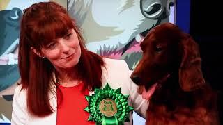 Crufts 2020  Irish Setters UK & Ireland Website
