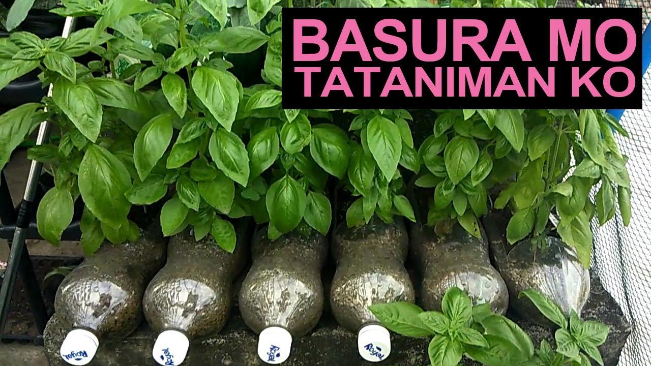 Basura Mo, Tataniman Ko I Upcycled Container Gardening Ideas