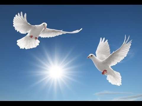 A song suggestion for Amira Willighagen : 'O for the Wings of a Dove'