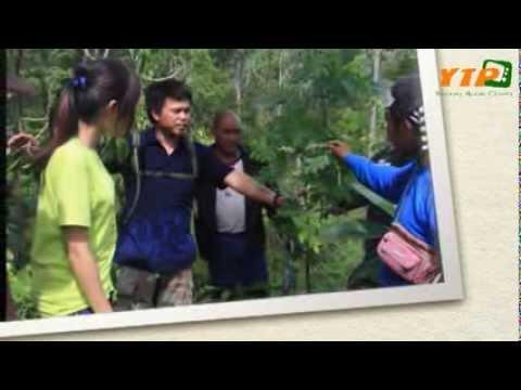 ยูงทอง Action Channel  ( ปี 2 เทป 2 ) ตอน ค่ายอบรมสมุนไพรไทย หัวใจอนุรักษ์บ้านเกิด