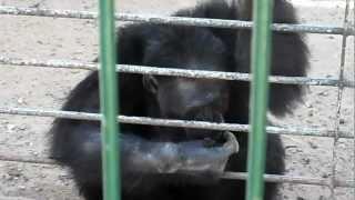 Safari Zoo Mallorca - Affen