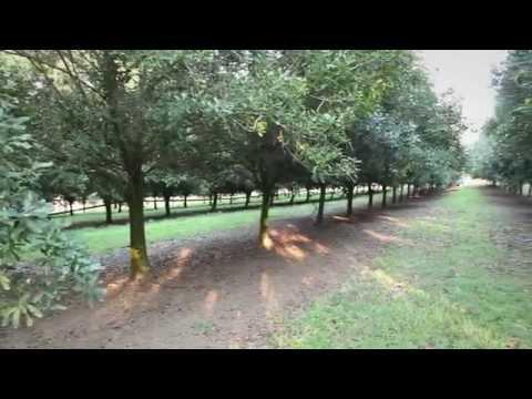 Nutworks Macadamia Factory - Farm To Plate