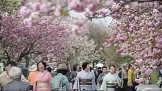 造幣局広島支局で「花のまわりみち」