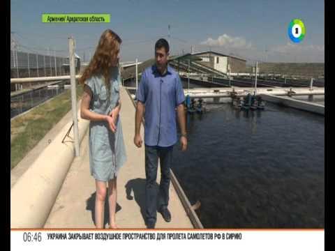 Как выращивают королевские виды рыб в Армении. Рубрика Наше лучше