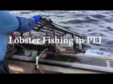 Lobster Fishing In PEI