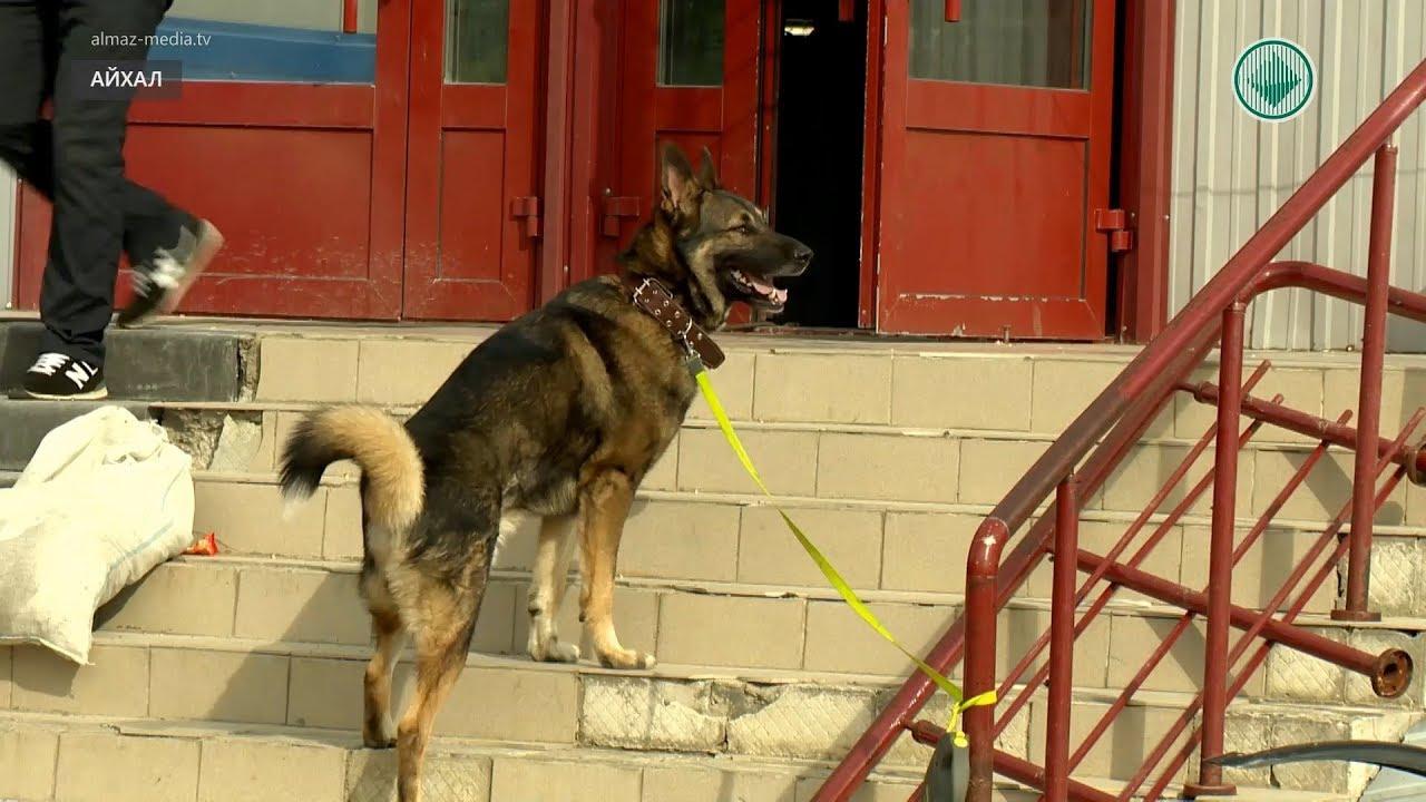 Штраф за выгул собак